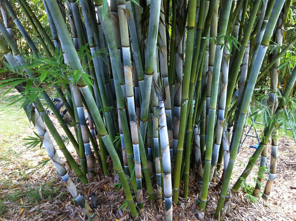 Best Bamboo Screening Plants Species To Use Right Now