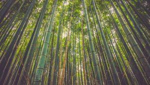 bamboo viscose vs cotton