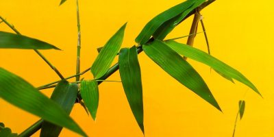 uses of bamboo leaves