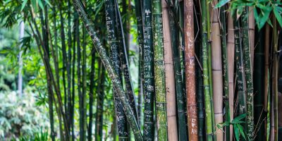 bamboo products to replace plastic